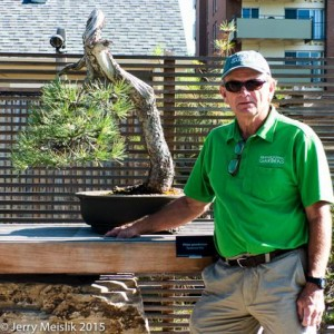 Larry Jackel, curator of the DBG bonsai collection and his Ponderosa pine