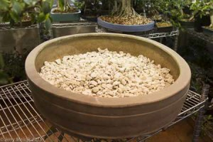 Coarse new inorganic media are pot into the bottome of the pot and a mound is left in the center of the pot