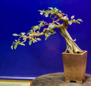The bonsai created from section 4 of the photograph