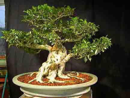How I Grow Bonsai Indoors